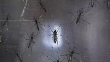 Член 69 - Комари в буря