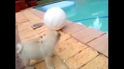 Много сладко кученце си дава домашно