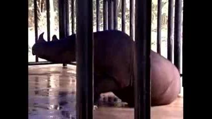 Застрашени носорози