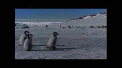 бебе пингвин
