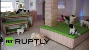 Brazil: It's a dog's life at canine kindergarten in Sao Paulo