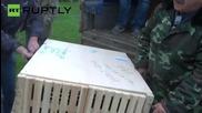 Feisty Wild Amur Tiger Cub Makes a New Friend