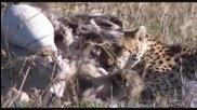 Тактиката на трите гепарда