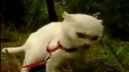 Супер драматична котка