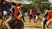 Мексиканско село отпразнува Деня на магарето