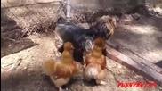 Смях! Кучета срещу петли