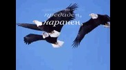 Като орел свободен