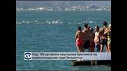 Над 100 делфина окупираха бреговете на новозеландкия град Уелингтън
