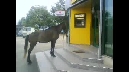 Кон чака да го обслужат в Банка