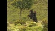 Zorro: La Espada Y La Rosa - Zorro