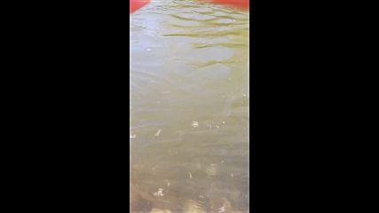 Лошата миризма на река Марица