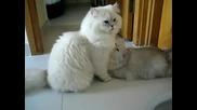 Красиви Котки