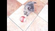 Сиво коте и коледна топка