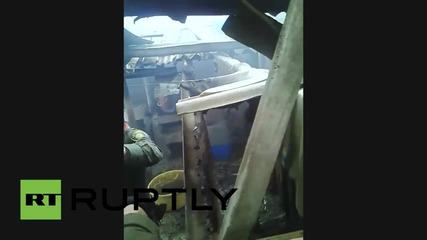 Colombia: Eight dogs saved from house fire in Pasto