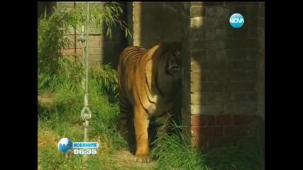 Премериха животните в Лондонския зоопарк