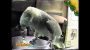 Папагал Имитира Плачещо Бебе