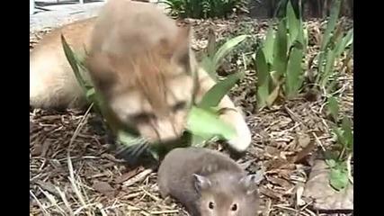Домашна Компилация със Забавни Котки!