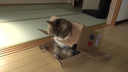 Дебелото коте Мару .. Transformers