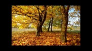 Атлас - Есенни цветя