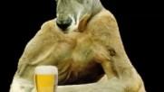 Rolf Harris & Beatles - Tie Me Kangaroo Down , Sport