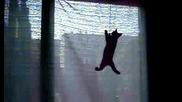 л - черно коте 3.08.2009 Dsci0036