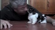 Едно невероятно и мило видео