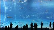 Втория по големина Аквариум в света! Гледайте на голям екран е!