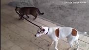Котка разхожда куче