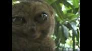 Изтрещела Маймуна