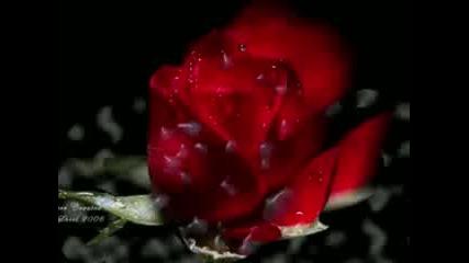 Какво е истинската любов? ... (text)