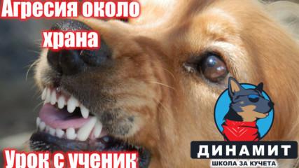 Куче проявява агресия около храна