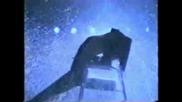 Flashdance Water Chair Dance