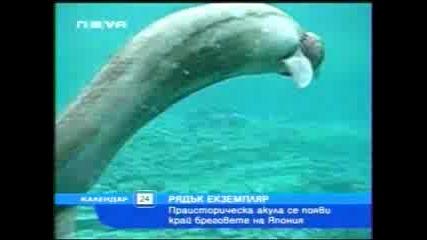 Рядък Вид Акула