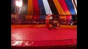 бебето пони Меги - цирк Aрена