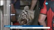 Избягал тигър уби грузинец в Тбилиси