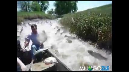 Рибно нашествие