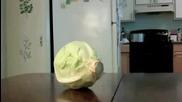 Dog Steals Cabbage