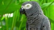 """Птичият парк на о-в Бали (""""Без багаж"""" еп.91)"""