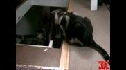 Котка прецаква друга котка (луд смях)