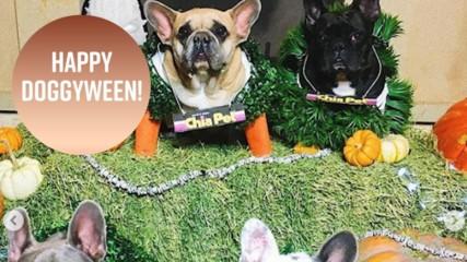 Doggyween: Best dressed celeb pets