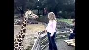 Giraf!