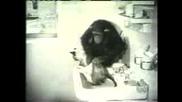 Смешна Маймуна Къпе Коте