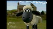Shaun The Sheep - Big Top Timmy