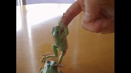 Жабите Близначки отвръща на удара - №2