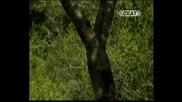 Ива и Ева Валентинови - Вадила Стана градина