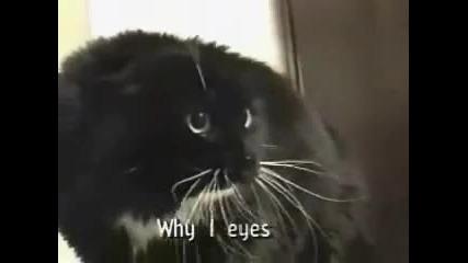 Говорещата Котка