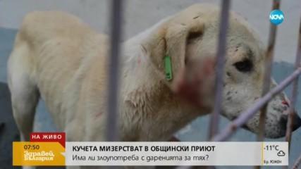 Бездомни кучета мизерстват в общински приют