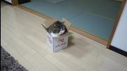 Нoвият дом на котето Мару