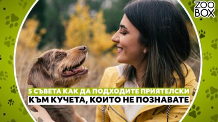 5 съвета как да подходите приятелски към кучета, които не познавате
