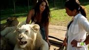 Мацки и Лъвове са Приятели !